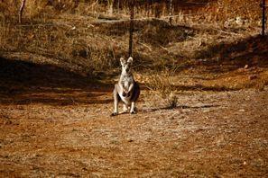 Mietauto Tamworth, Australien