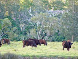 Mietauto Taree, Australien