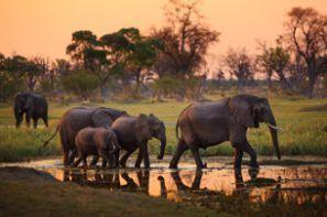 Leihauto Botswana