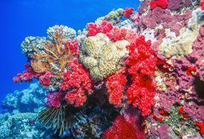 Mietauto Coral Coast, Fiji