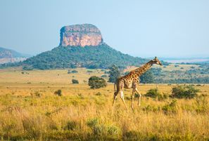 Mietauto Ellisras, Südafrika