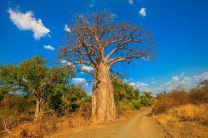 Mietauto Musina, Südafrika
