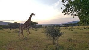 Mietauto Rustenburg, Südafrika
